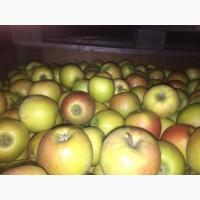 Продаем яблоки товарные и промпереработка, НДС