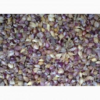Продам семена чеснока- воздушку