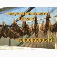 Продам Табак Вирджиния Голд 250 грн 1 кг