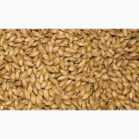 Куплю пшеницу фуражную (отходы пшеницы)