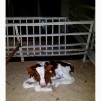 Продам коров#039;яче молоко