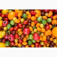 Семена томатов из частной коллекции