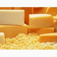 Продам сыр на промпереработку жирный