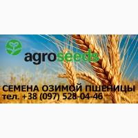Семена озимой пшеницы КОМПЕНСАЦИЯ -80%