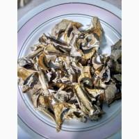 Продам сушений гриб веселка