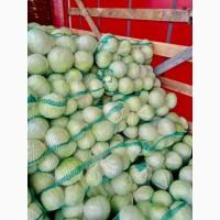Продам капусту Анкома