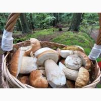 Куплю більшу кількість білих заморожених грибів