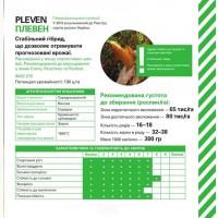 Pleven ФАО 270, год 2020 - Семена кукурузы (фр.селекция) Харьковская обл