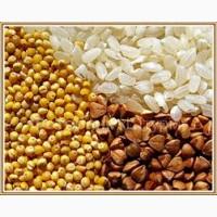 Продам крупу пшеничную 2, 3, Артек оптом