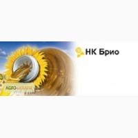 Соняшник НК Бріо Сингента посівний матеріал Імпорт