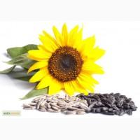 Продаем пестициды для подсолнечника по лучшим ценам