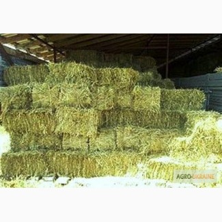 Продам 800т люцерны, лугового сена. Наша доставка. Опт