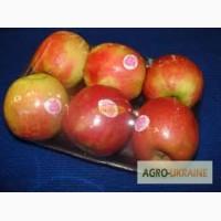 Лотки из полисторола для овощей и фруктов