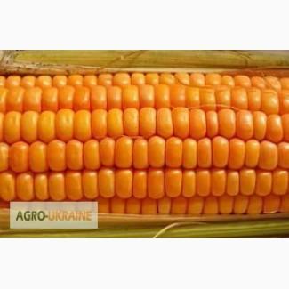 Семена кукурузы венгерской селекции МВ 355 ФАО 340