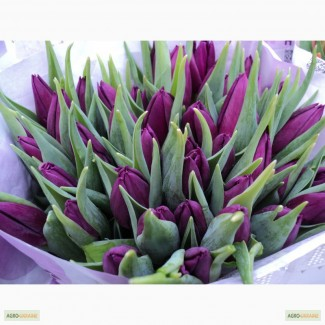 Супер Ціна на Тюльпани оптом