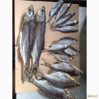 Вяленая речная рыба