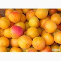 Закупаем абрикос мелкий любое количество киев