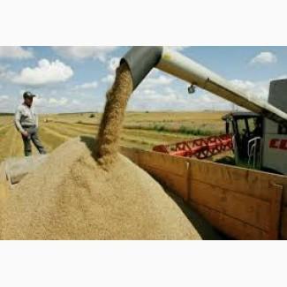 Підприємство закуповує С/Г продукцію Пшеницю (2-6 класу) по всім регіонам України