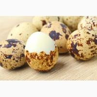 Продам перепелиные яйца Акция к Новому году