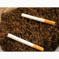 Табак Вирджиния ферментированный, ароматный, высшего качества.СЕМЕНА-20ГРН
