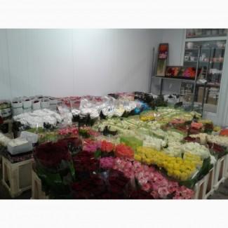 Лілії, калли, тюльпани, іриси, оптом