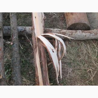 Можжевельник древесина, ветки, иглы, хвоя