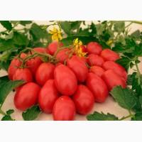 Продам помидор большим оптом