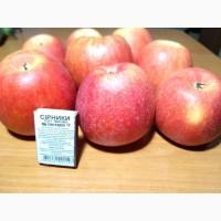 Продам яблука сортів Джанаголд, Чемпіон