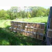 Бджолопакети карпатки з доставкою на 2021 год