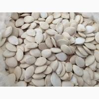 Закуповуємо гарбузове насіння сорт Сіроволжська