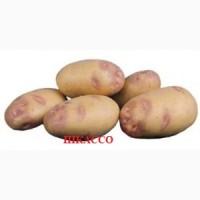 Продам картофель от производителя
