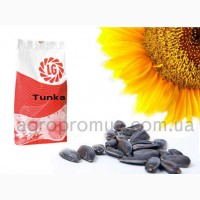 Подсолнух Тунка (LG Tunca)