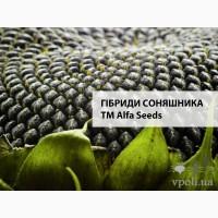 Семена подсолнечника Альзан, Анцилла, Мишель, Тео, Винченцо от АЛЬФА СЕМЕНА - ALFA SEEDS