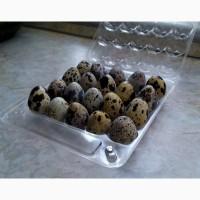 Яйця перепелині домашні