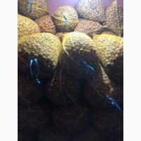 Куплю орех долбун (жадныи) от2тон