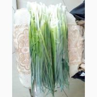 Продам зелёный лук 40.55 см