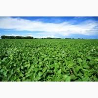 Канадская соя – семена сорта Венус
