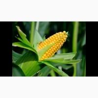 Покупаем зерновые и масличные культуры