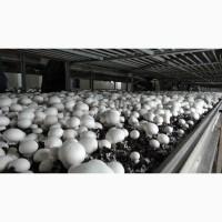 Доставка грибов шампиньонов по всей Украине