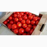 Оптовая продажа реализация помидоров доставка