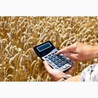 Продаём зерновые культуры (пшеницу, рапс, сою, кукурузу, ячмень)