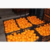 Продам мандарины свежие сладкие