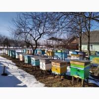 Продам 80-85 бджолопакетів карпатки