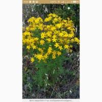 Купим сухую траву Зверобоя, Пелюстку соняшника по Украине