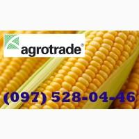 Семена кукурузы. Французская селекция. Гибрид Плевен ФАО 270, год 2020, документы