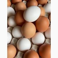 Екологічно чисті яйця домашніх курей