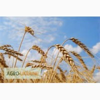 Купим зерно пшениці