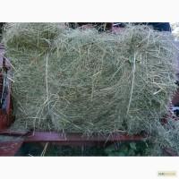 Продам луговое сено в тюках, люцерну. Только опт от 700шт. Привоз бесплатно