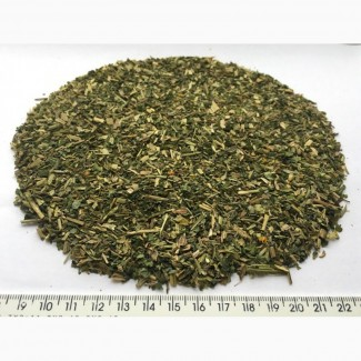 Чистотел трава