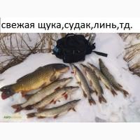Свежая речная рыба опт и розница